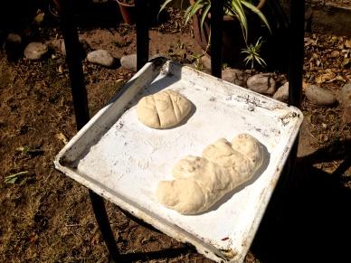 My dead dog aka the dough